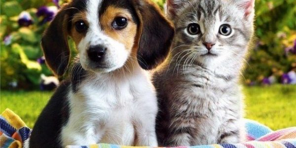Pets – Find a Furry Friend in movbb.com